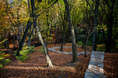Stone path through autumn forest Royalty Free Stock Images