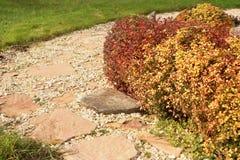 Stone path and berberis shrubs in autumn garden Royalty Free Stock Image