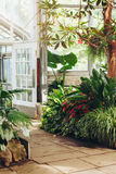 Stone path in botanical garden greenhouse with many green trees, plants and colorful flowers. Nature ecology background royalty free stock photo