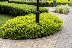 Stone path with decorative bushes. In the park stock images