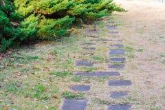 Stone path on dry grass. Stock Photo