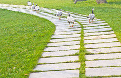 Stone path with ducks Royalty Free Stock Photo