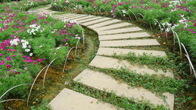 Stone path with flowers Royalty Free Stock Photo