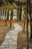 Stone Path through Forest Royalty Free Stock Photos