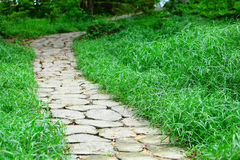 Stone path in forest Stock Photography