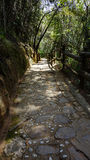 Stone path in the forest in the park Arvi Stock Photos