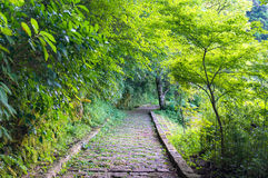 Stone path in forest, park Royalty Free Stock Image