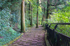Stone path in forest, park Royalty Free Stock Photography