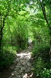 Stone path in the forest Royalty Free Stock Photos
