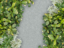 Stone path in garden. Top view of stone path in garden Stock Photo