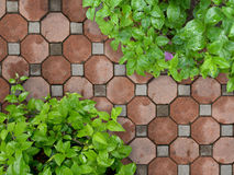 Stone path in garden Stock Photos
