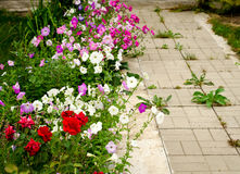 Stone path in the garden flanked with colorful flowers Royalty Free Stock Photos