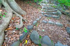Stone path in the garden. Stone path through garden in landscapen format Stock Photos