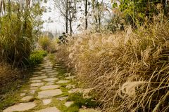 Stone path in grass and weeds of sunny winter afternoon. Chengdu,China royalty free stock photos