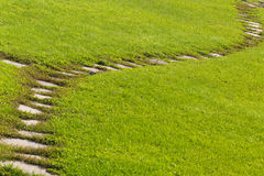 Stone path in green field Royalty Free Stock Image