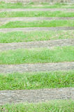 Stone path and green grass Stock Photography