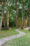 Stone path between green trees Stock Photos