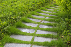 Stone path in the meadow Stock Image
