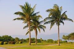 Stone path with palm trees. In Yalong bay,Sanya,Hainan,China Royalty Free Stock Photos