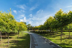 Stone path in the park. Changchun city of jilin province day fine stone path in the park, shining in the autumn sun everything seems so bright. Clean the SLATE Royalty Free Stock Photo