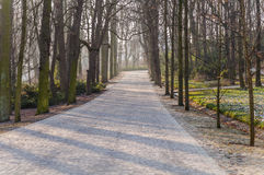 The stone path in the park, the road from the bricks in the city Royalty Free Stock Image