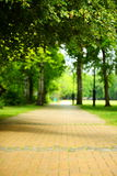 The stone path in the park. Royalty Free Stock Images