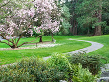 Stone path through park in spring. A stone paved path through a garden in Lithia Park in Ashland, Oregon in spring with blossoms on a tulip tree Royalty Free Stock Photos