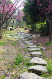 Stone path with plum blossom. Stone path with pink plum blossom  flowers tree Stock Images