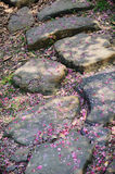 Stone path with plum blossom petal Royalty Free Stock Images