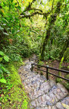 Rainforest in Ecuador Royalty Free Stock Image
