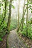 Stone path in rainforest Monteverde Costa Rica Royalty Free Stock Photos