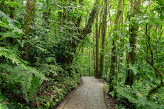 Stone path in rainforest Monteverde Costa Rica stock photography