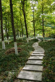 Stone path in spring woods Royalty Free Stock Photography