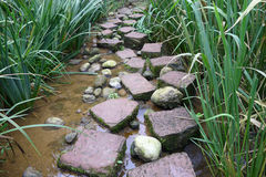 Stone path. In a stream Stock Photography