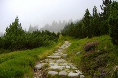 Stone path in Tatra mountains royalty free stock photo