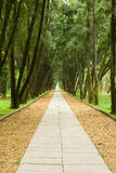 Stone path and tranquail pine woods. Royalty Free Stock Images