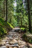 Stone path between the trees in the mountains Royalty Free Stock Image