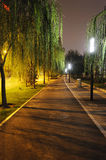 Stone path with trees at night Stock Images