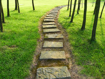 Stone path with trees. In the park stock photos