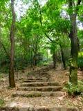 A stone path through trees Royalty Free Stock Image
