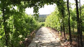 Stone path through vineyard landscape in summer