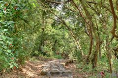 Stone path. Stone walkway through a forested royalty free stock photography
