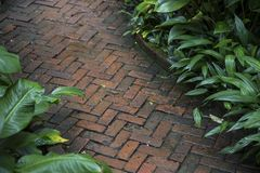 Stone path way in garden Stock Photography