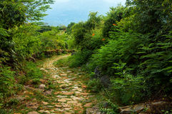 Stone Path through Wilderness. A stone path winding through the wilderness Royalty Free Stock Images