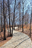 Stone path in wood Royalty Free Stock Image