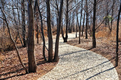 Stone path in wood Royalty Free Stock Photos