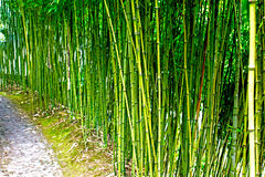 Stone pathway in a bamboo forest Royalty Free Stock Images
