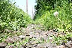 Stone pathway in forest near railway. Green grass with dandelion royalty free stock photos