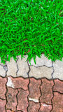 Stone pathway with grass in a green garden Royalty Free Stock Photography