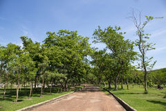 Stone Pathway in the Green Park. Garden Stock Photos